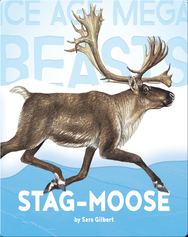 Stag-moose