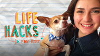 Dog Hacks | LIFE HACKS FOR KIDS