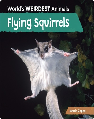 Flying Squirrels