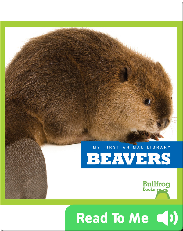 My First Animal Library: Beavers