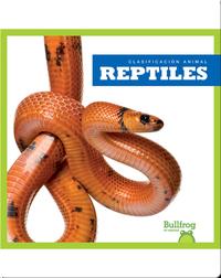 Clasificación Animal: Reptiles