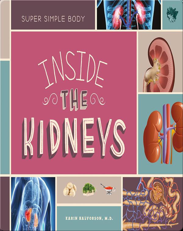 Inside the Kidneys