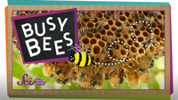 SciShow Kids: Busy Bees