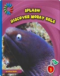 Discover Moray Eels