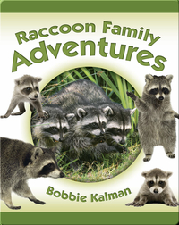 Raccoon Family Adventures
