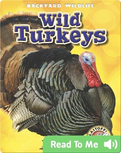 Backyard Wildlife: Wild Turkeys