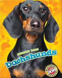 Awesome Dogs: Dachshunds