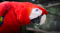 Gabby Wild and George the Handsome Scarlet Macaw