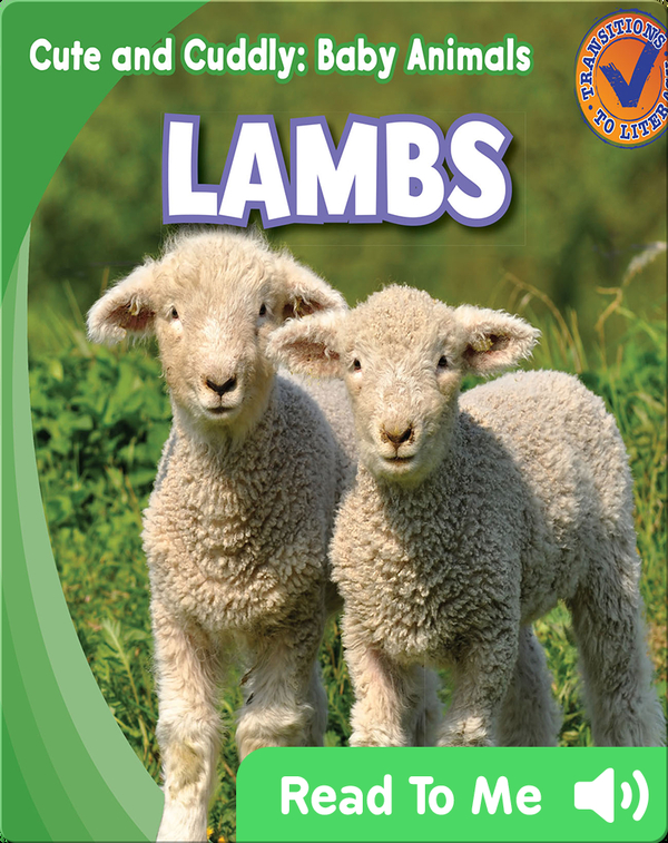 Cute and Cuddly: Lambs