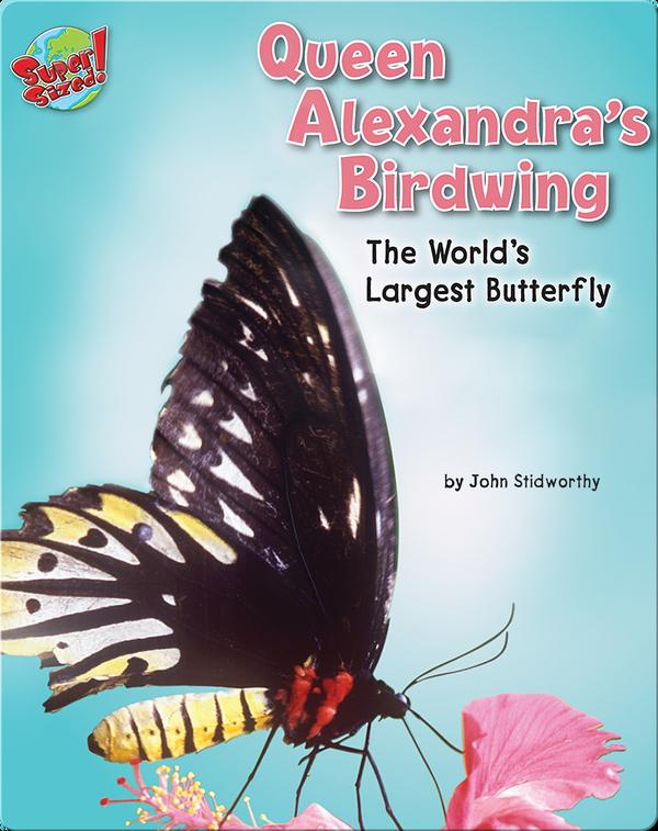 Queen Alexandra's Birdwing: The World's Largest Butterfly