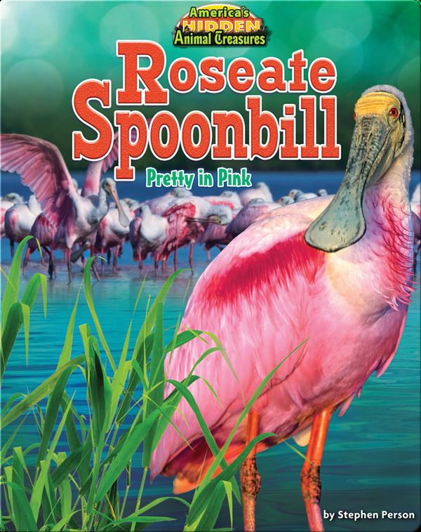 Roseate Spoonbill: Pretty in Pink