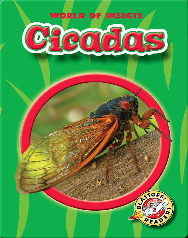Cicadas