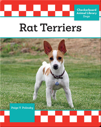 Rat Terriers