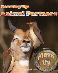 Teaming Up: Animal Partners