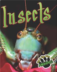 Insects (E2E)