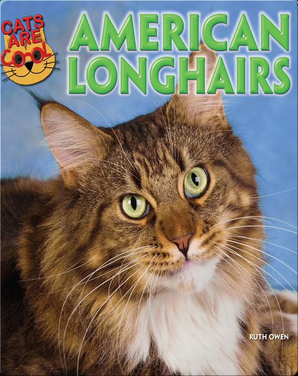 American Longhairs