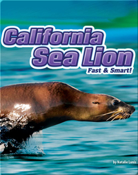 California Sea Lions: Fast & Smart!