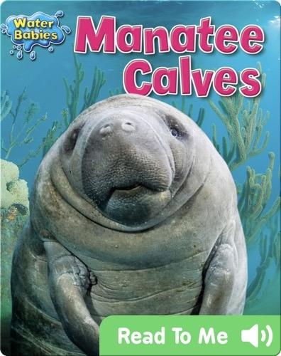 Manatee Calves