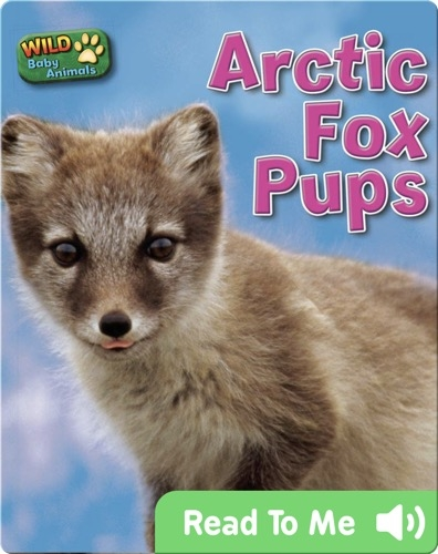 Arctic Fox Pups