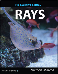 My Favorite Animal: Rays