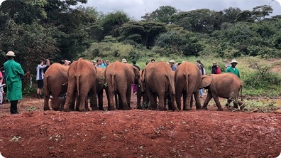My Heartwarming Visit to an Elephant Orphanage