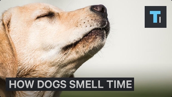How Dogs Can Tell Time With Their Nose