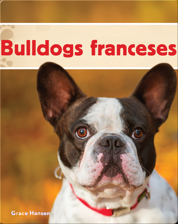 Bulldogs franceses