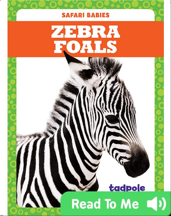 Zebra Foals