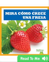 Mira cómo crece una fresa (Watch a Strawberry Grow)