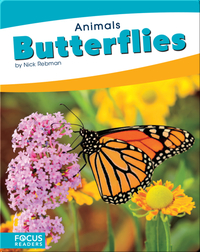 Animals: Butterflies