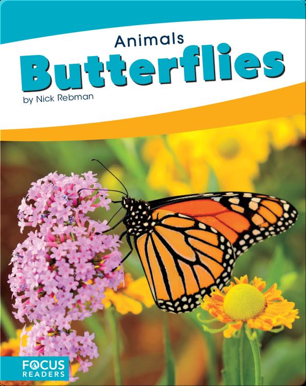 Animals: Butterflies