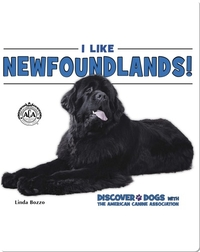 I Like Newfoundlands!
