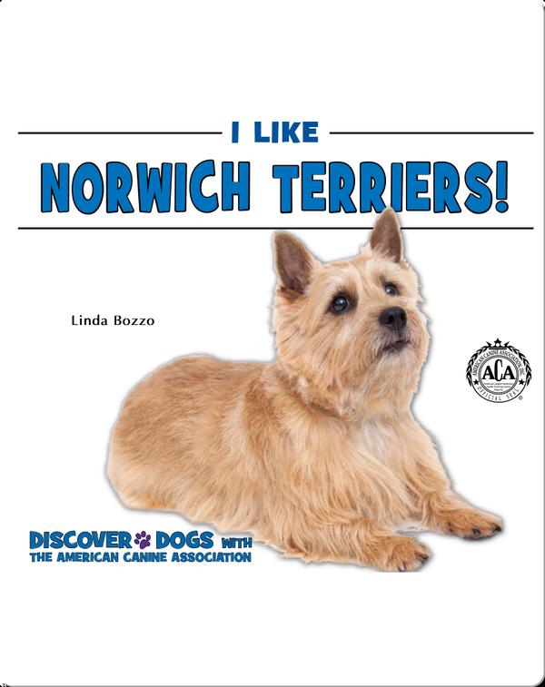 I Like Norwich Terriers!