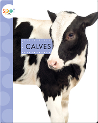 Baby Farm Animals: Calves