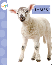 Baby Farm Animals: Lambs