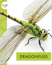 Creepy Crawlies: Dragonflies