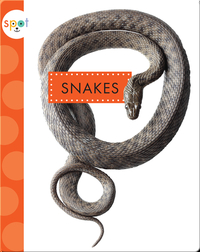 Backyard Animals: Snakes