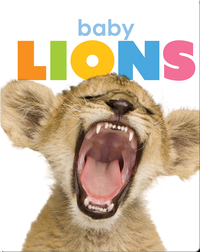 Starting Out: Baby Lions
