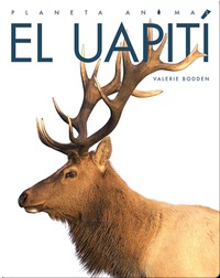 Planeta Animal: El Uapití