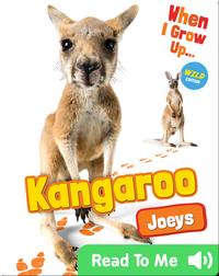 Kangaroo Joeys