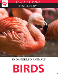Endangered Animals: Birds