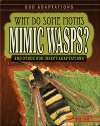 Why Do Some Moths Mimic Wasps? And Other Odd Insect Adaptations