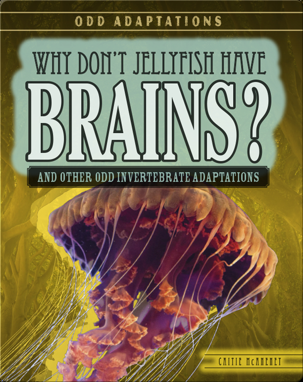Why Don't Jellyfish Have Brains? And Other Odd Invertebrate Adaptations