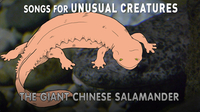 Songs for Unusual Creatures: The Giant Chinese Salamander