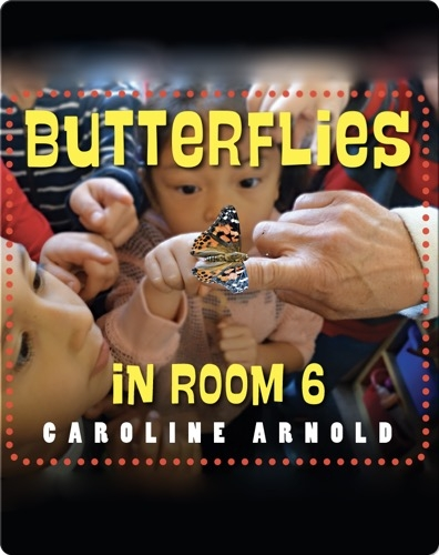 Butterflies in Room 6