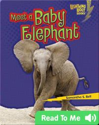 Meet a Baby Elephant
