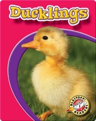 Ducklings: Watch Animals Grow