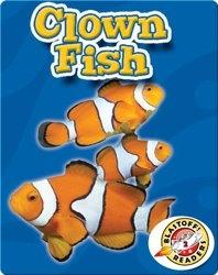 Clown Fish: Oceans Alive