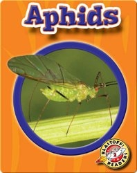 Aphids: World of Insects