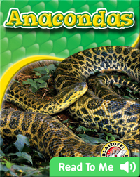Anacondas: Snakes Alive